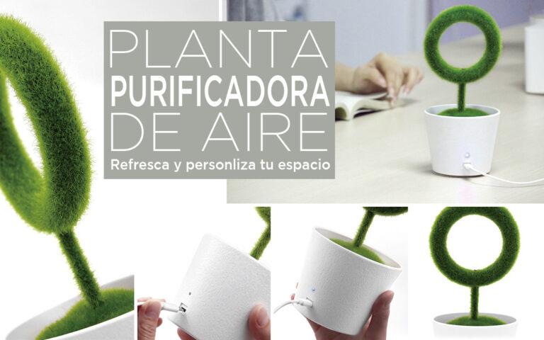 planta purificadora de aire - Blog RG regalos publicitarios